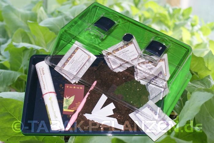 3 Sorten Tabak-Samen Anzuchtset  Zimmergewächshaus Geschenk